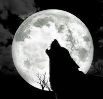 Image result for wolf moon pics